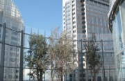 Bligh Office Tower