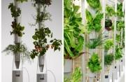 Coltivazioni verticali in casa