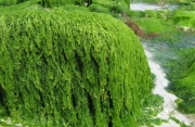 Das Algen Haus