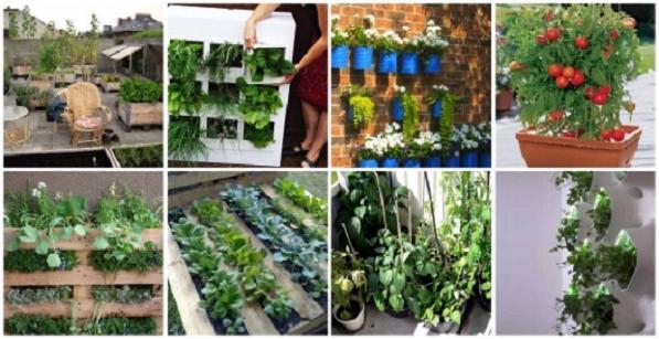 Giardino verticale fai da te idee green for Orto pensile fai da te