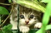 I gatti più dolci del web