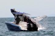 La Balena Dispettosa