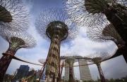 Orto a Singapore