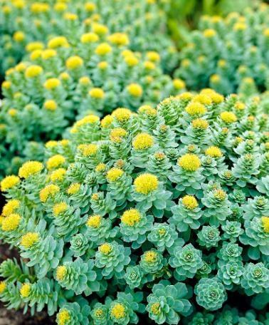 I dirimpettai le migliori piante da tenere in casa for Piante esterno resistenti