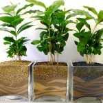 Quando annaffiare le piante idee green for Annaffiare le piante
