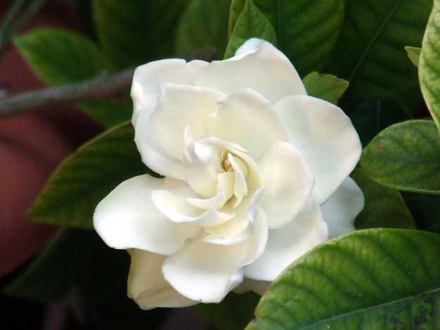 curare piante da fiore