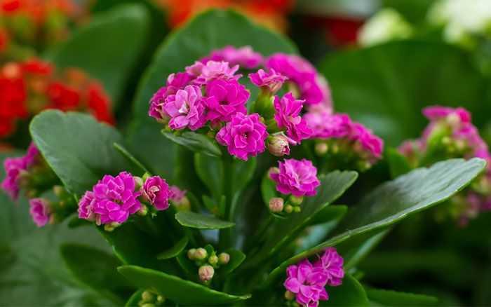 piante da appartamento con fiori idee green