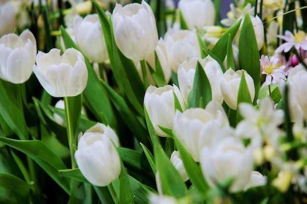 Giardino in fiore idee green - Grossi fiori da giardino ...