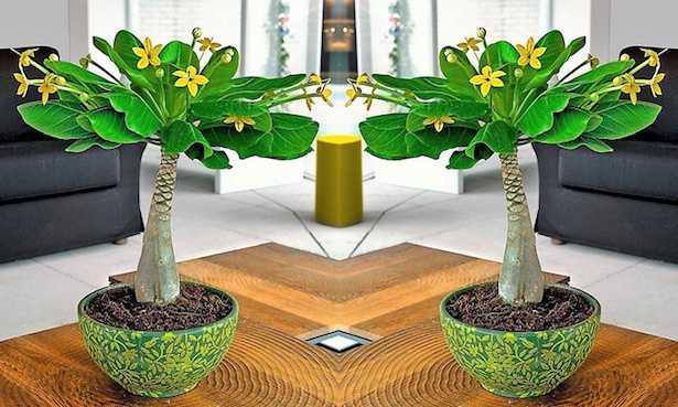 piante fiorite da interno