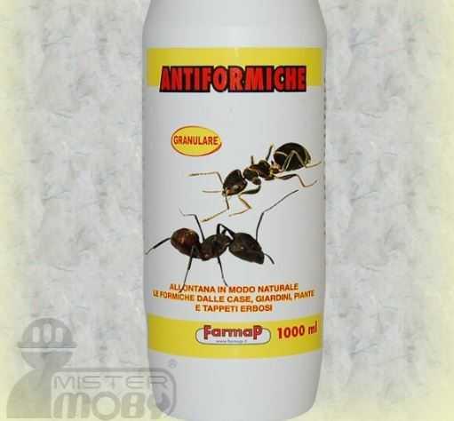 rimedi contro le formiche in appartamento - 28 images - rimedi