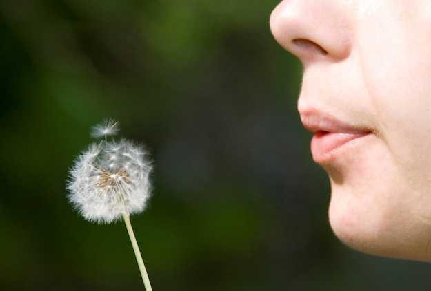 Dieta della nicchia ecologica idee green for Nicchia sinonimo