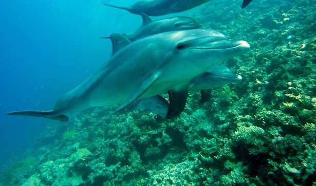 nuotare coi delfini