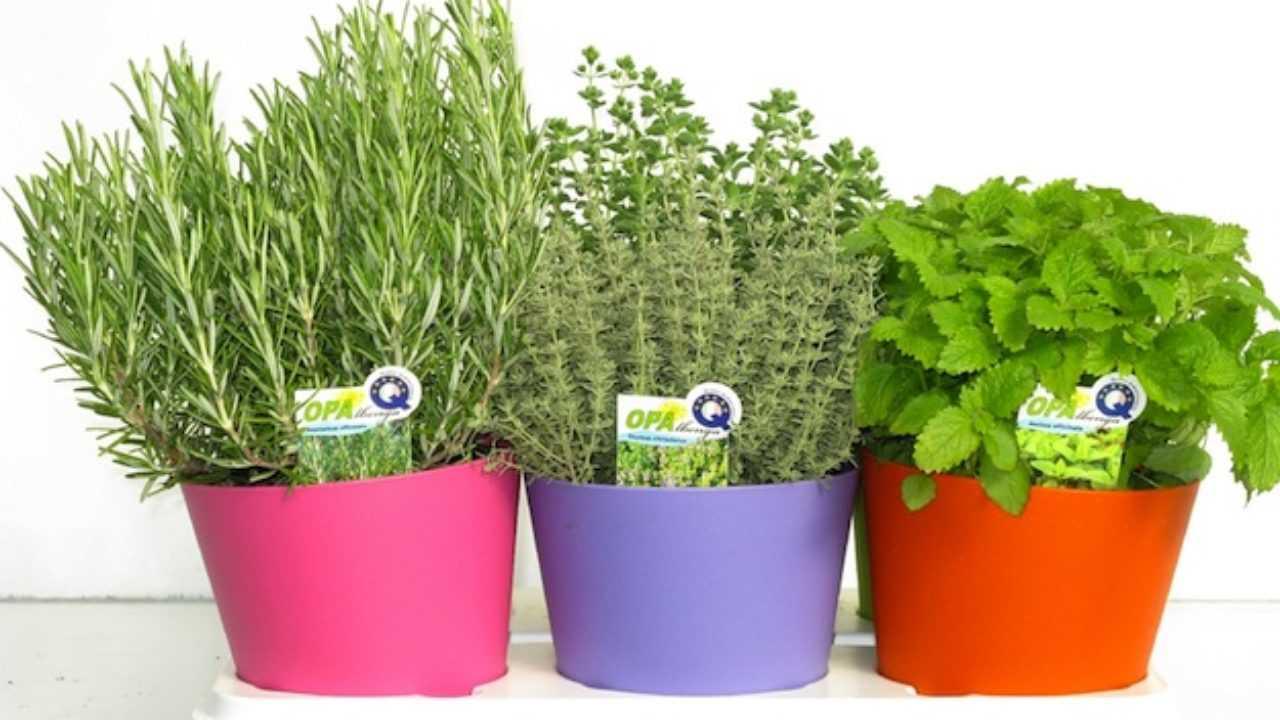 Coltivare In Casa Piante Aromatiche come curare piante aromatiche in casa - idee green