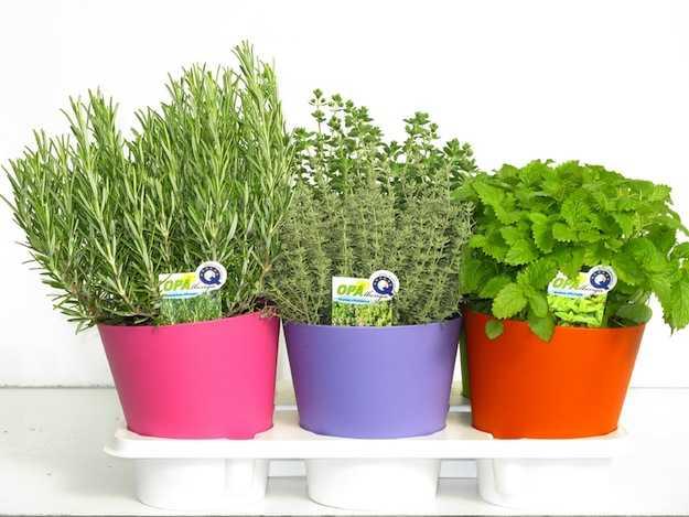 Come curare piante aromatiche in casa idee green - Erbe aromatiche in casa ...