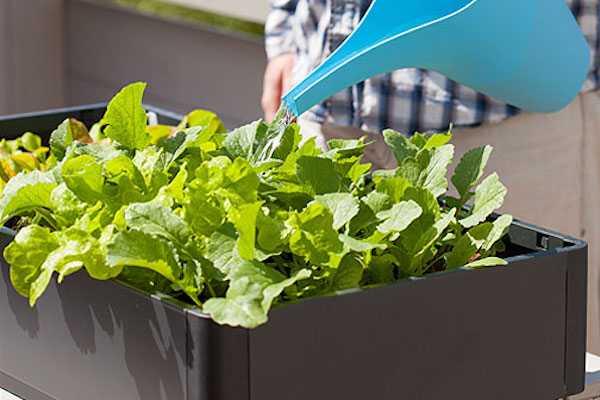 Come coltivare sul balcone di casa