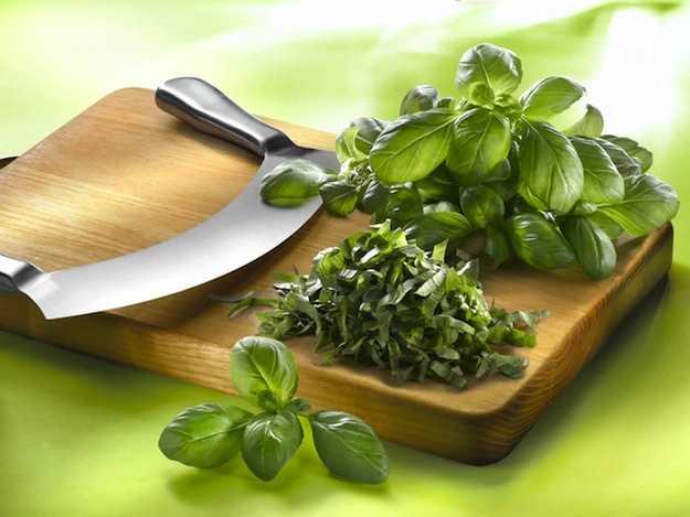 Come coltivare il basilico idee green for Coltivare il basilico