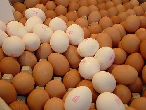 Tante uova tra cui scegliere