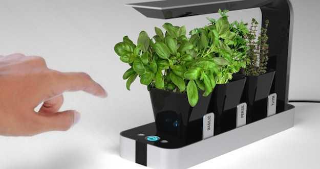BB Garden, per le tue piante da cucina - Idee Green