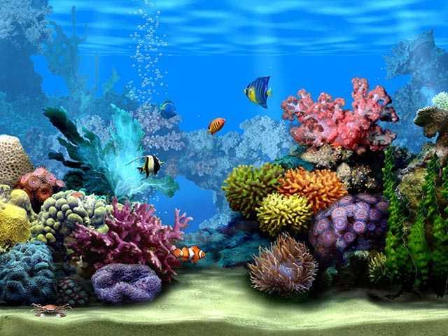 Come purificare l'acqua dell'acquario - Idee Green