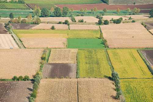 Campi coltivati