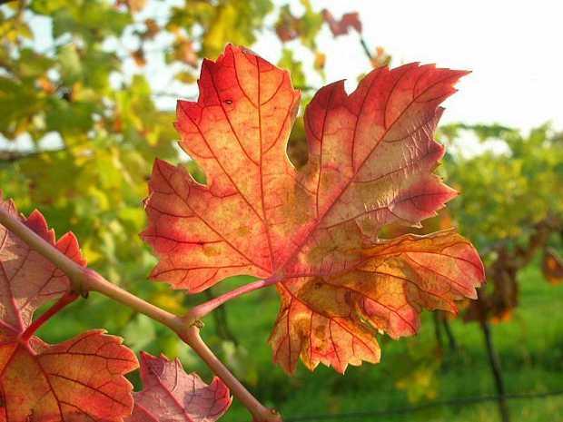 Foglia in autunno