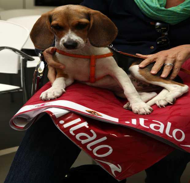 Un cane su Italo