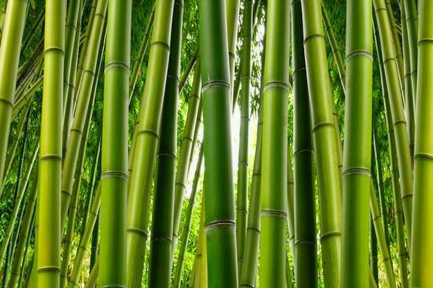 Come costruire un muro di bamb idee green for Canne di bambu per pergolati