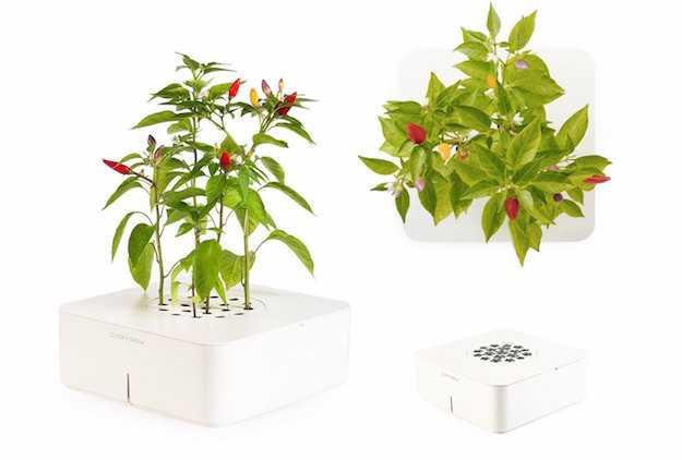 coltivazione in scatola