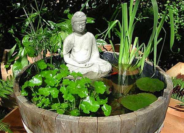 Come coltivare le piante acquatiche idee green for Filtro acquario fai da te