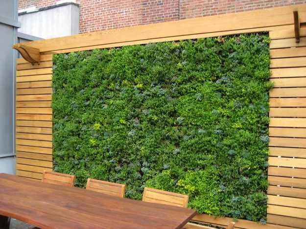 Come costruire un muro verde idee green - Piante per coprire muri ...