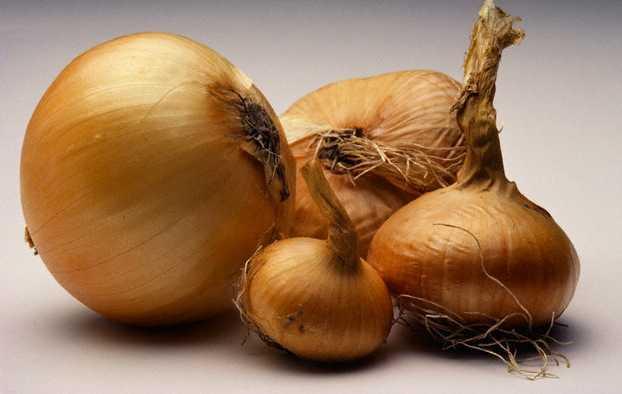 Come coltivare cipolle idee green for Semina cipolle