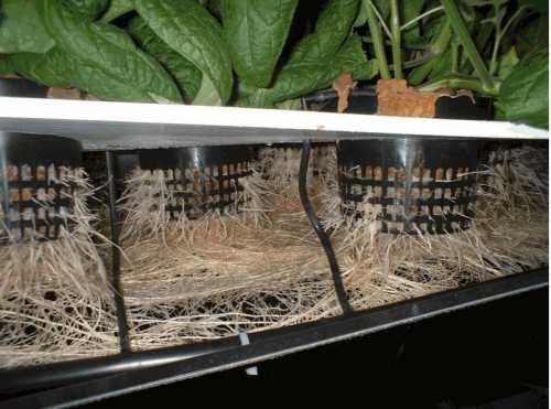 Coltivazione idroponica idee green for Serra balcone fai da te
