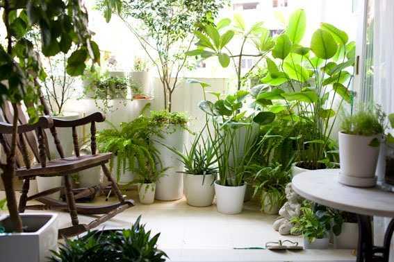 Rimedi naturali alle malattie delle piante idee green for Piante in casa