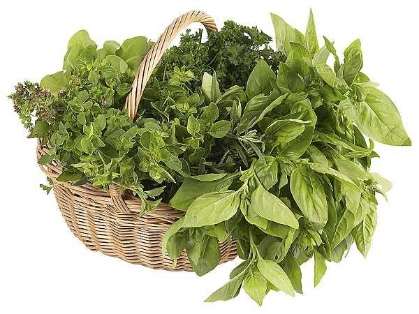 Un cesto di erbe aromatiche