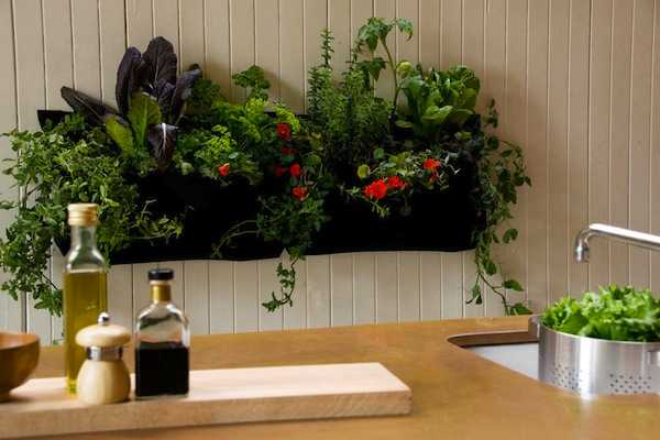 Giardini verticali per interni idee green Indoor living wall herb garden
