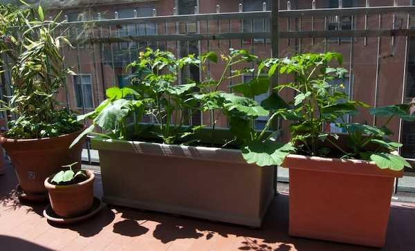 orto sul terrazzo idee green
