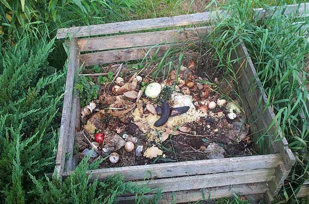 Bioattivatori per il compostaggio domestico