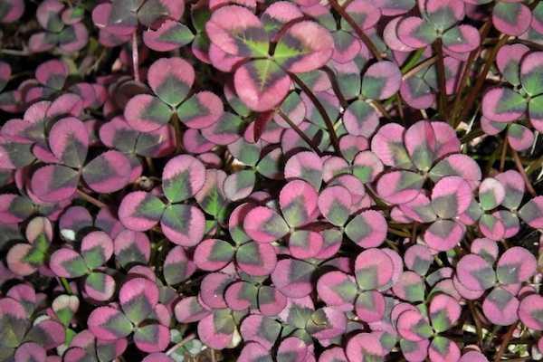 Piante da giardino facili da coltivare idee green