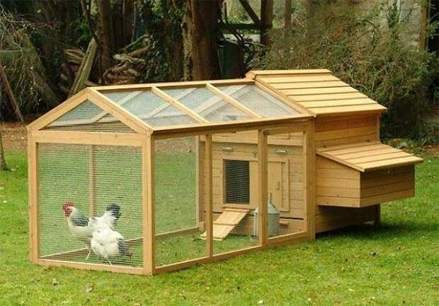 gestire un pollaio idee green