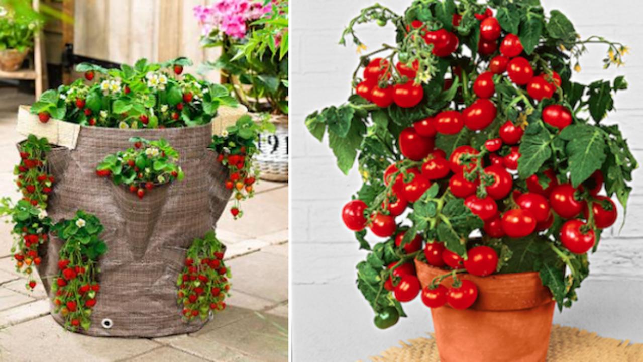 Come Coltivare Pomodori Sul Balcone orto sul balcone - idee green