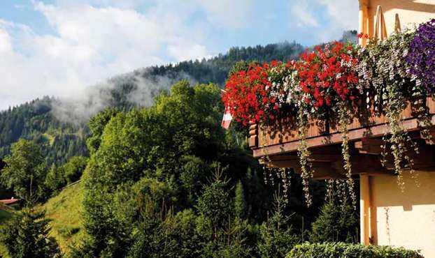 Piante da giardino idee green for Cespugli fioriti da giardino