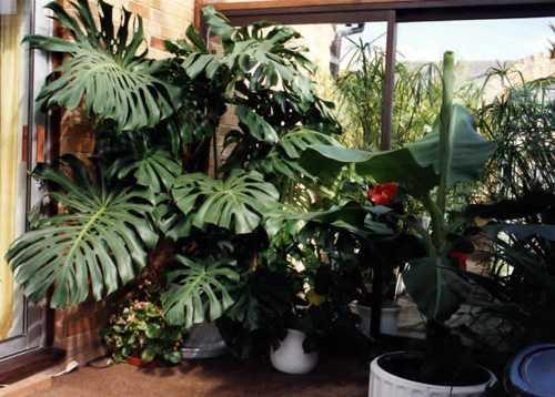 Alcune piante d'appartamento