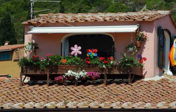 Fiori da balcone idee green for Sempreverdi da balcone