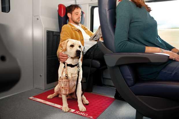 Un cane XXL su un treno Italo