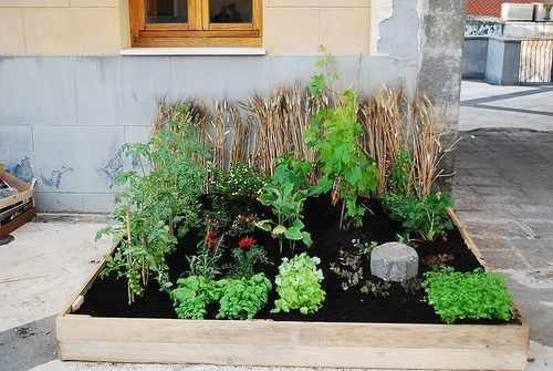 Un esempio di piccolo orto in casa