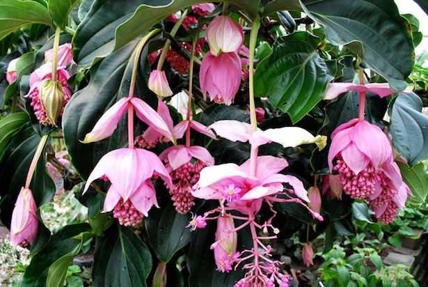 Piante da appartamento elenco e consigli idee green for Piante e fiori da appartamento