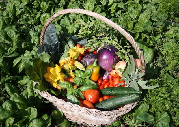L 39 orto biologico gli insetticidi adatti idee green - L orto in giardino ...
