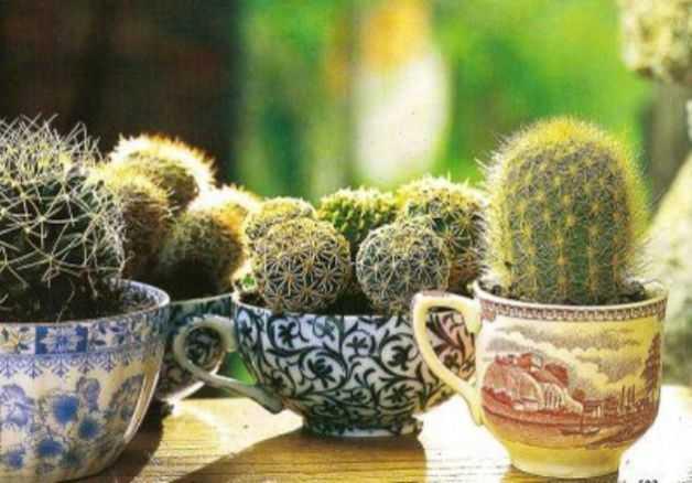 Piante grasse da appartamento idee green - Le piante grasse si possono tenere in casa ...