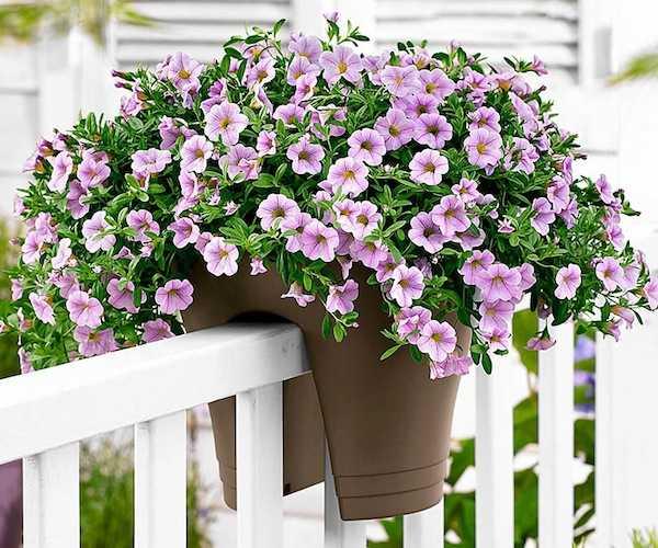 Idee per un balcone fiorito idee green for Fiori per balconi soleggiati