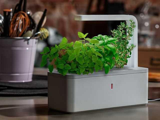 Click grow il vaso intelligente per coltivare in casa idee green - Coltivare piante aromatiche in casa ...